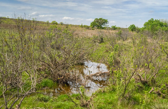 Lometa 252 Acre Ranch 1 (102)