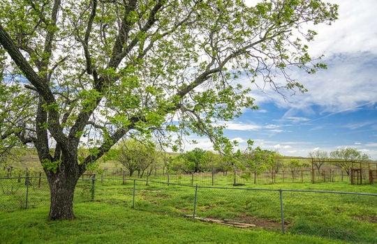 Lometa 252 Acre Ranch 1 (50)