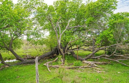 Lometa 252 Acre Ranch 1 (67)