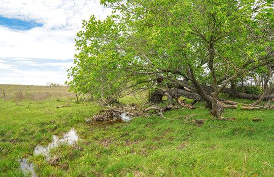 Lometa 252 Acre Ranch 1 (68)