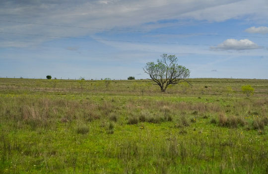 Lometa 252 Acre Ranch 1 (85)