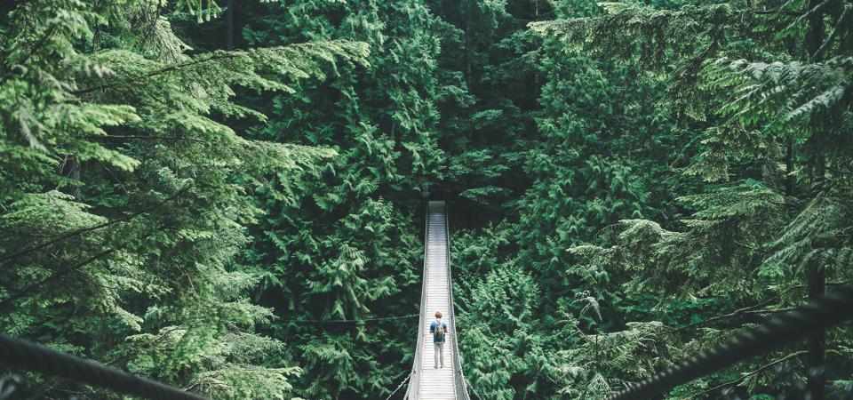 suspension bridge in trees