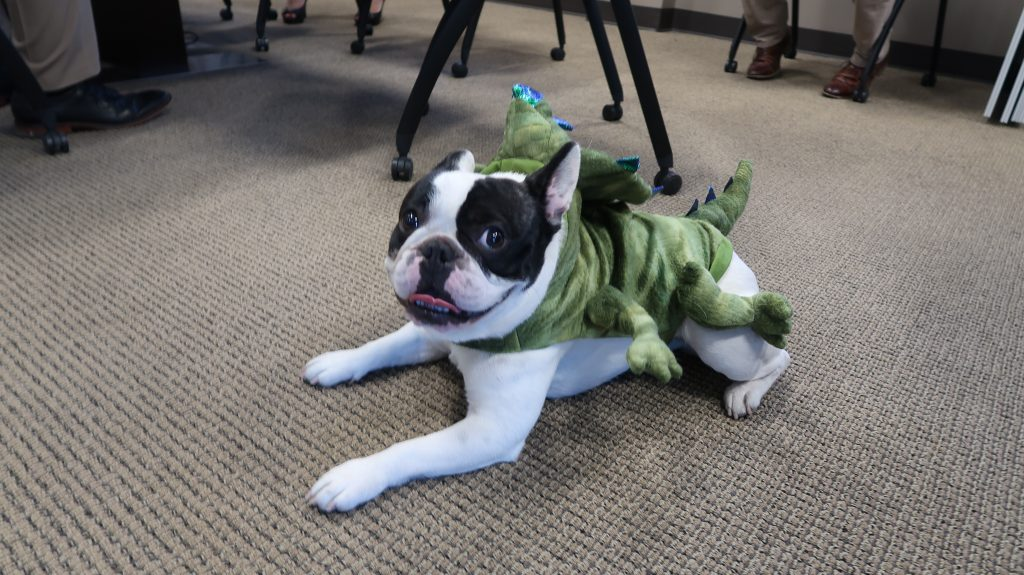 French Bulldog in Dinosaur Costume