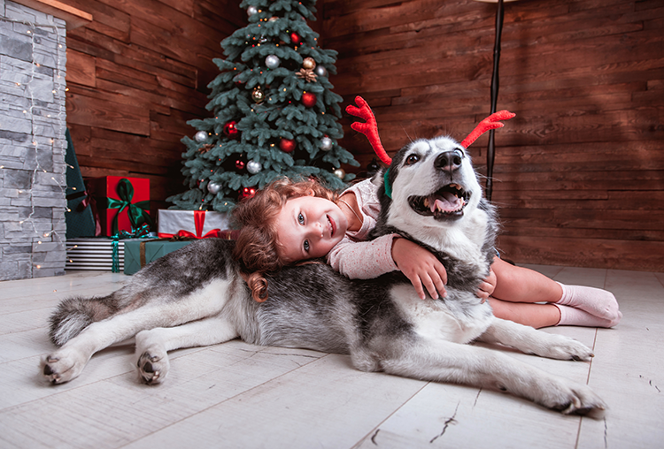 Dog Safety Checklist for the Holidays [Infographic]