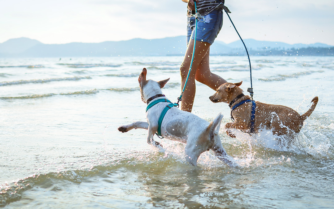 Why Dogs Love Huntington Beach Real Estate: Parks and Beaches