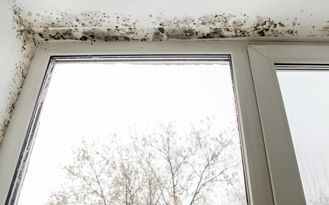 Risks and Difficulties of Mold Litigation by Rinat Klier-Erich