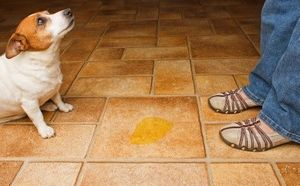 Eliminate Pet Odor To Sell Home