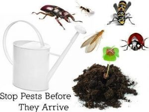 Stop Bugs Before They Arrive