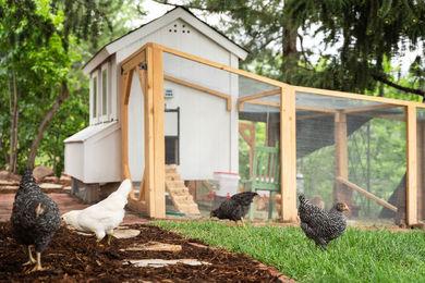 Hillsdale-Exterior-Chicken-Coop6