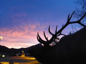Statue of Sampson the famous Estes Park Elk greets the day.