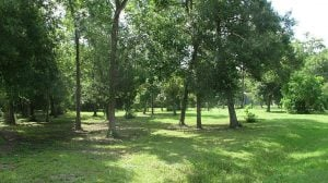Picture of Old_River-Winfree Woodland area