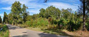 Plum Grove Back road