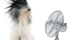 Easy Steps to Maintain Your Air Conditioner