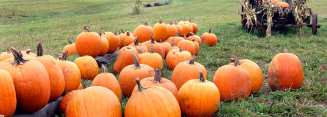 Chicagoland's Best Pumpkin Farms
