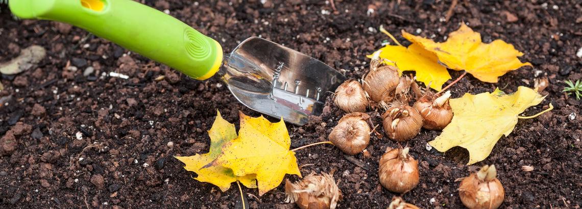 Plant Spring Bulbs