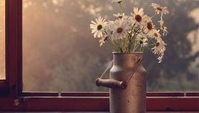 Change the Mood With Plants