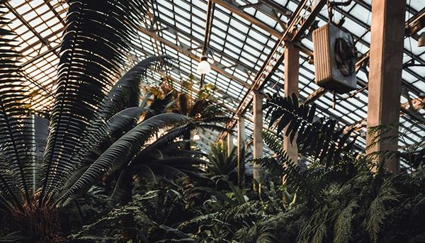 Romantic spots around Chicago: Garfield Park Conservatory