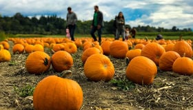 10 Iconic Pumpkin Patches to Visit Around Chicagoland