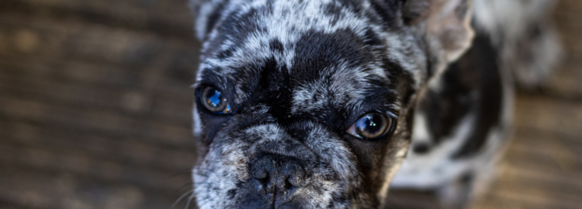 Relocating With Pets: How to Avoid a 'Ruff' Time