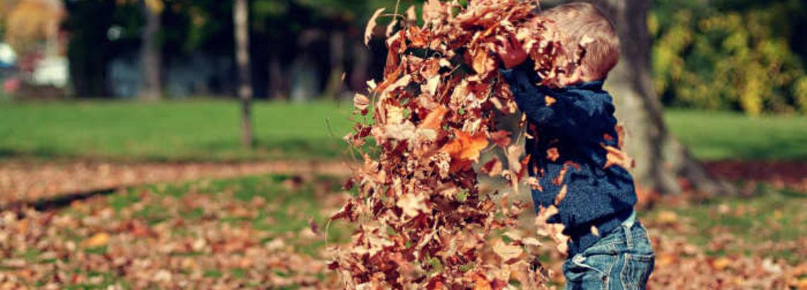 7 Secrets for Fall Lawn Care