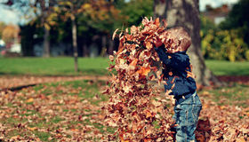 7 Secrets for Fall Lawn Care