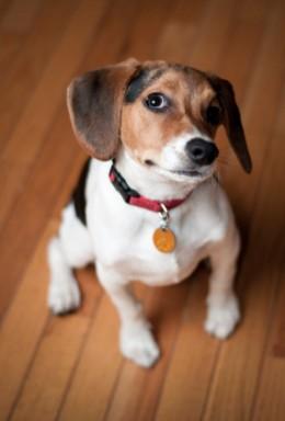 Pet Friendly Flooring: A Primer