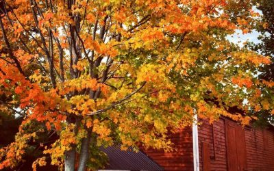Fall in Orange and Sussex Counties