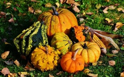 October in Orange and Sussex Counties