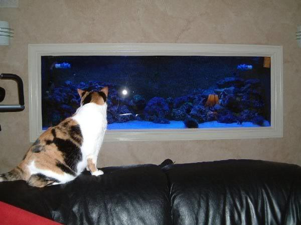 In-Wall Fish Tank