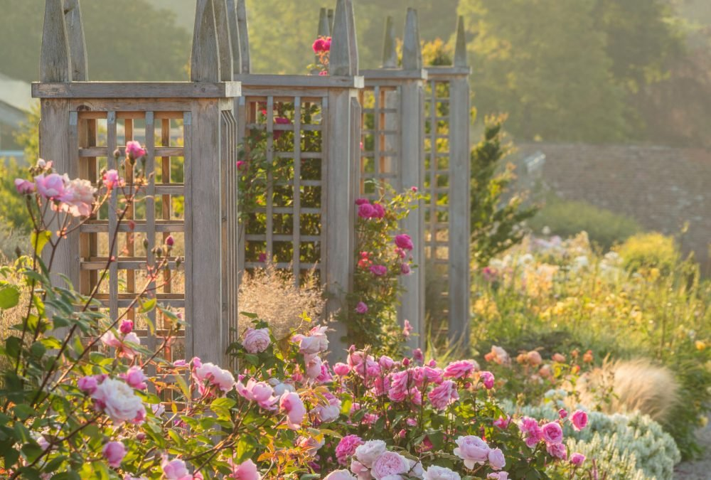 Starting and Maintaining a Rose Garden