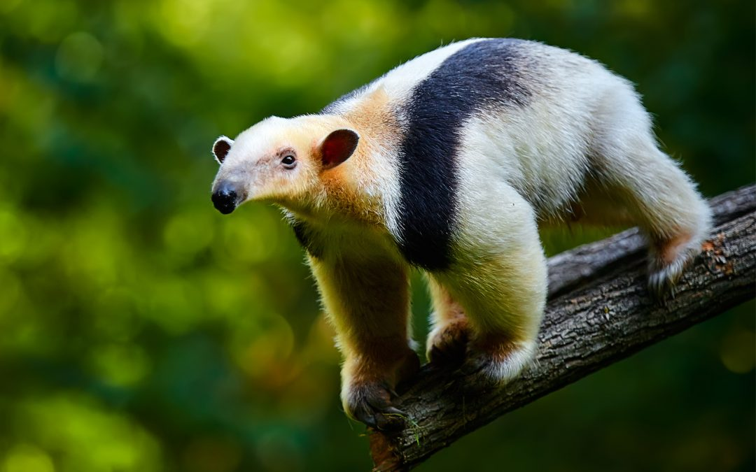The Number One Habit To Develop – Become An Anteater!